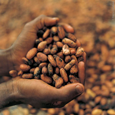 """slavery in the chocolate industry essay The case """"slavery in the chocolate industry"""" discusses labor exploitation in the  chocolate industry it specifically addresses the cocoa beans grown on farms in."""