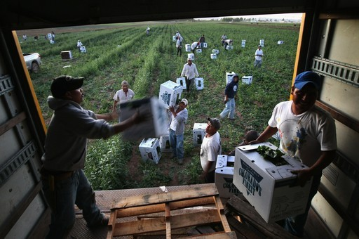 the lives of migrant workers essay Riveting photos of migrant workers remind us who really harvests our food  she explained what her life was like to modern farmer:  first-person essays, features, interviews and q&as about .