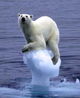 http://webpages.scu.edu/ftp/mburrill/images/polar-bear-stranded.jpg