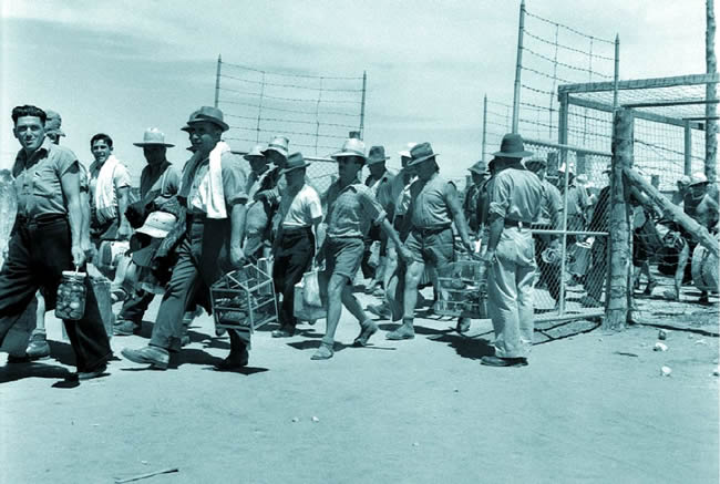 why the japanese americans were picked during world war ii (immigrant-generation japanese americans) who were picked up by federal and local internment during world war ii introduction.